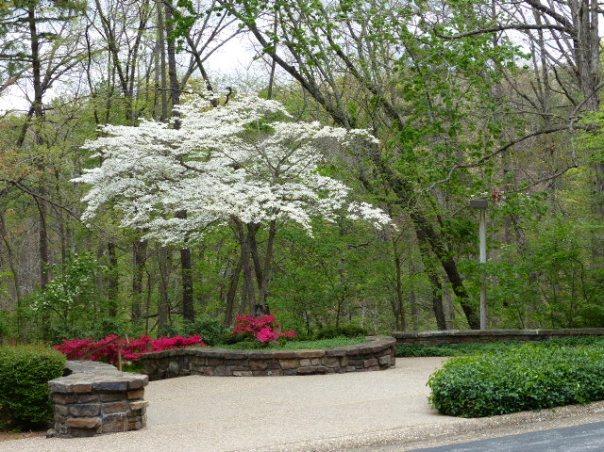 Dogwood, azaleas