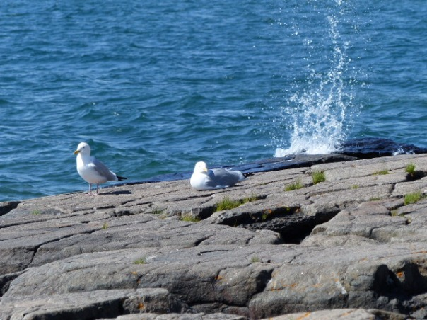 Seagulls on Lake Superior